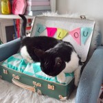 DIY DECO : UN COCON POUR SON CHAT