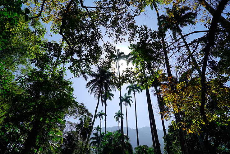 rio de janeiro bonne adresse voyage blog conseil jardin botanique 4
